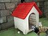 塑膠中空成型狗屋