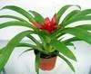 迷你植物,迷你盆栽植物,微型盆景