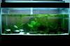 生態水族箱