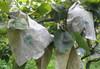 各式水果育果袋(套袋)